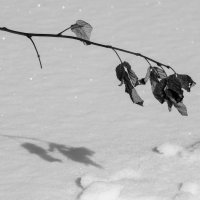 Зимний минимализм :: Виктор Соколов