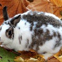 декоративный кролик Белочка :: Горкун Ольга Николаевна