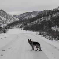 Чёрно белый дресс код зимних гор :: Татьяна Степанова