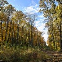Краски Осени. :: Эдвард Бескровный