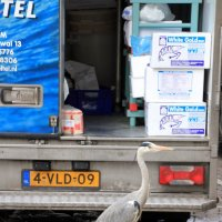 Мир соблазна....или: Серая цапля и грузовик с морепродуктами:-) :: Olga