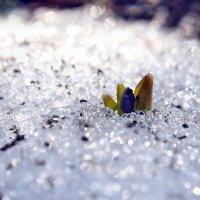Весны этюды. Март. Первый... :: Александр Резуненко