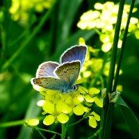 цветы крылатые и земные 3 :: Александр Прокудин