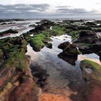 Побережье Атлантического океана :: Karolina