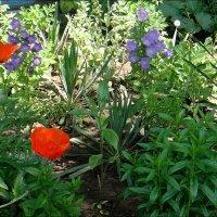 Майская красота нашего двора :: Нина Корешкова