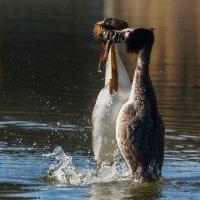 Танцы на воде :: Павел Руденко