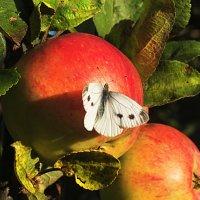 Однажды осенью в саду... :: Андрей Кротов