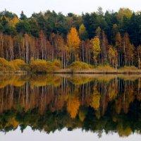 Лес , точно терем расписной... :: Tatyana