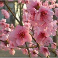 Всем желаю солнечной весны!! :: Эля Юрасова
