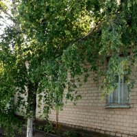 Летом :: Svetlana Lyaxovich