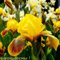 С наступающим праздником Весны ! :: Александр Прокудин