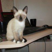 Кошка Машка :: Павел Нарышкин
