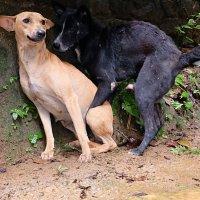 Собаки :: Олег Гаврилов