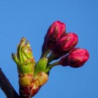 Дорогим Женщинам! С чудесным праздником Красоты, Весны и Любви! :: Юрий Поляков