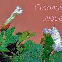 Столько любви... :: Фотогруппа Весна.