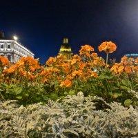 цветы на Исаакиевской площади :: Елена