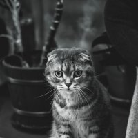 Что это? :: Наташа Рюрикова