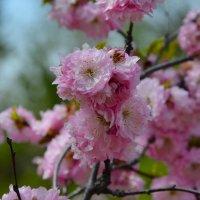 Весна.   Милые женщины! Поздравляю Вас с 8 марта! :: Валерий Медведев