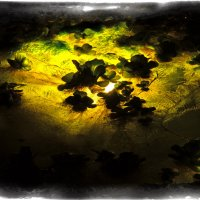 Ночной пруд :: Alexander Dementev