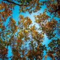 Краски осени... :: Арина