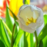 Весна идет, весне дорогу!) :: Elenn S