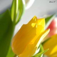 весна) :: Elenn S