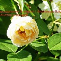 С 8 марта :: Александр Запылёнов