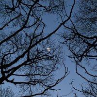Весенняя луна :: Юлия Шарифуллина