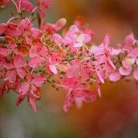 Осень :: Марина Киреева