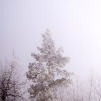 Праздничное утро :: Вера Сафонова