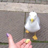 Птичьи истории :: Veselina *