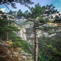 Лесной водопад :: Евгений Зинченко