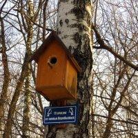 Три года искал этот скворечник в парке. На месте! :: Андрей Лукьянов