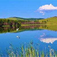 Чайка над озером :: Сергей Чиняев
