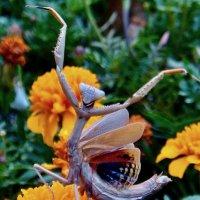 ФОРТИССИМО.....!!! Дирижёр цветочного оркестра .....!!!!! :: Серёжа Стрельников