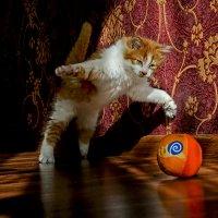 Как выскочу, как выпрыгну, пойдут клочки по закоулочкам ! :: Александр Бойко