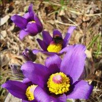 Почувствуем запах весны :: Лидия (naum.lidiya)
