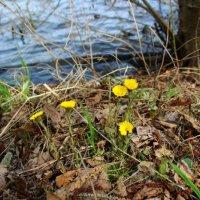 Весна... озеро Святое :: Galina ✋ ✋✋