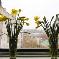 Нарциссы на окне :: татьяна