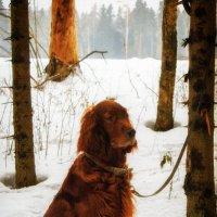встреча в лесу))) :: Екатерррина Полунина