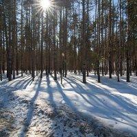 тени на снегу :: павел бритшев