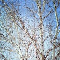 Скоро весна! :: Ирина Безверхова