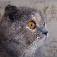 С какой вы планеты, кошачьи глаза... :: Людмила Богданова (Скачко)