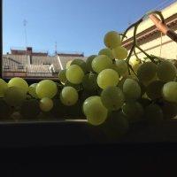 Гроздь винограда,янтарный отлив...в руках у тебя,как услада... :: Ирина