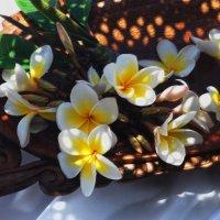 """Плюмерии душистой аромат... Цветы на """"Фотокто"""" для всех девчат! :: Лара Гамильтон"""