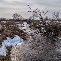Река Дрезна разлил начинается :: Андрей Дворников