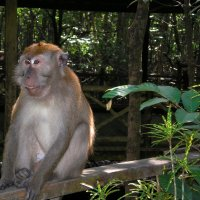Жители тропических лесов островов Малайзии :: spm62 Baiakhcheva Svetlana