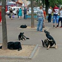 Город людей и... собак :: Сергей Тарабара
