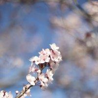 Весна :: Anastasia Pozdniakova
