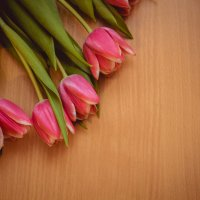 Тюльпаны :: Алёнка Шапран